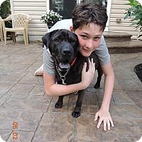 Adopt A Pet :: Jersey - Elyria, OH