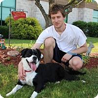 Adopt A Pet :: Duchess-Prison GRAD - Elyria, OH