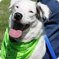 Adopt A Pet :: Petey - Boulder, CO
