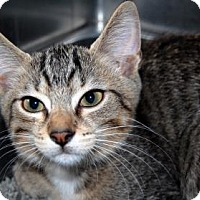 Adopt A Pet :: Daniel Cleaver - Bradenton, FL