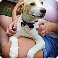 Adopt A Pet :: Utah - Kimberton, PA