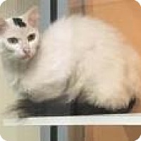 Adopt A Pet :: Stefan 6296 - Columbus, GA