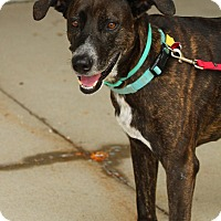 Adopt A Pet :: Tonks - Lafayette, IN