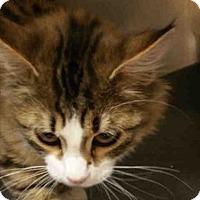 Adopt A Pet :: CHAMP - Missoula, MT