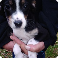 Adopt A Pet :: Ken - Kendall, NY