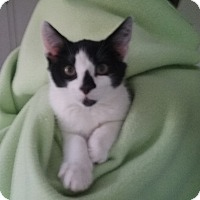Adopt A Pet :: Charlie - Glen Mills, PA