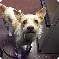 Adopt A Pet :: Baby - Great Bend, KS
