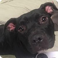 Adopt A Pet :: Roxy - Joliet, IL