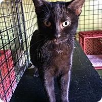 Adopt A Pet :: Bianca - St. Louis, MO