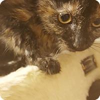 Adopt A Pet :: Lucinda - Gadsden, AL