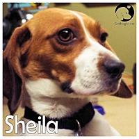 Adopt A Pet :: Sheila - Novi, MI