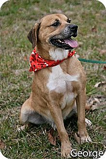 Shepherd (Unknown Type) Mix Dog for adoption in Jackson, Mississippi - George