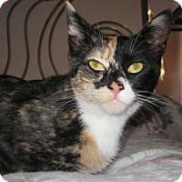 Adopt A Pet :: Kaiya - bloomfield, NJ
