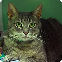 Adopt A Pet :: Chelsea - Lunenburg, MA
