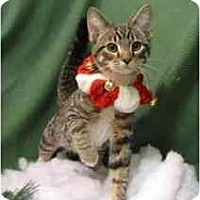 Adopt A Pet :: Elf - Milwaukee, WI