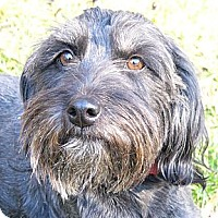 Adopt A Pet :: Rhianna - Mocksville, NC
