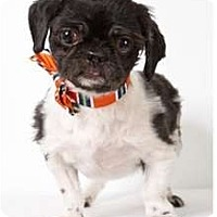 Adopt A Pet :: Cornwallace - New York, NY