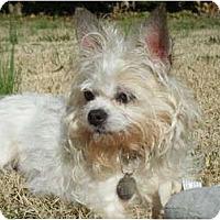 Adopt A Pet :: Dottie - Mooy, AL