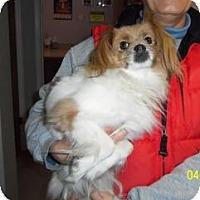 Adopt A Pet :: Penny Jo - Shawnee Mission, KS