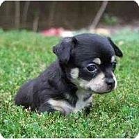 Adopt A Pet :: Sophie - Johnsburg, IL