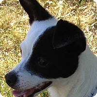 Adopt A Pet :: Petey - Washington, PA