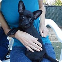 Adopt A Pet :: Jessica - Encinitas, CA