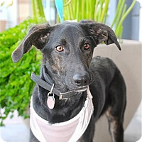 Adopt A Pet :: Bella - Scottsdale, AZ