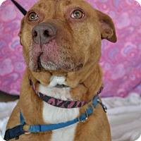 Pit Bull Terrier Mix Dog for adoption in East Smithfield, Pennsylvania - Terra