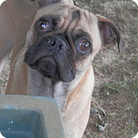 Adopt A Pet :: Frankie - Clarksville, TN