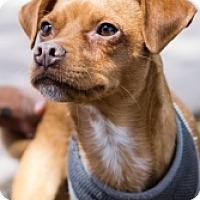 Adopt A Pet :: Rufus - Mesa, AZ