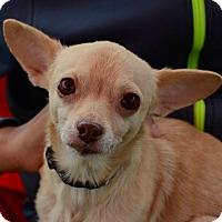 Adopt A Pet :: Riah - San Francisco, CA