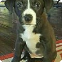 Adopt A Pet :: Hudson - Marlton, NJ