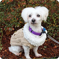 Adopt A Pet :: Nieve - Mount Laurel, NJ