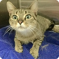 Adopt A Pet :: Topaz - Webster, MA