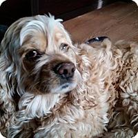 Adopt A Pet :: Benjamin - Saskatoon, SK