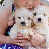 Adopt A Pet :: Frankie - Loomis, CA