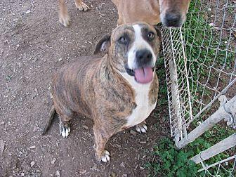Plott Hound Mix Dog for adoption in Hayden, Alabama - Daisy
