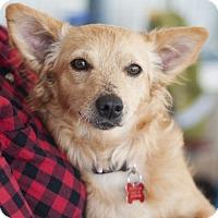 Adopt A Pet :: Lacoste - San Diego, CA