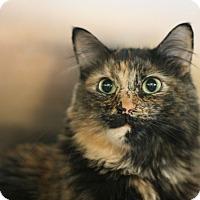 Adopt A Pet :: Kaylee - Canoga Park, CA