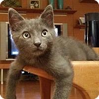 Adopt A Pet :: Boris - Cerritos, CA