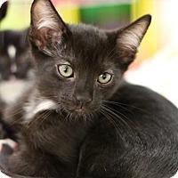 Adopt A Pet :: Taz - Sacramento, CA