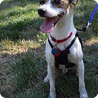 Adopt A Pet :: Jeffrey (Has application) - Washington, DC