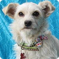 Adopt A Pet :: Baby Girl - Cuba, NY