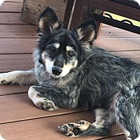 Adopt A Pet :: SISTER - Fort Worth, TX