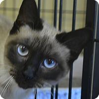 Adopt A Pet :: Tasha - Winchester, KY