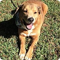 Adopt A Pet :: Max - San Leon, TX