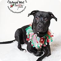 Adopt A Pet :: Rosemarie - Apache Junction, AZ