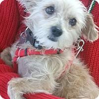 Adopt A Pet :: Mio - Phoenix, AZ