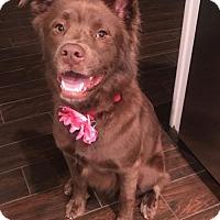 Adopt A Pet :: Pumpkin - Royal Palm Beach, FL