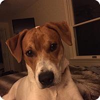 Adopt A Pet :: Tripp - Billerica, MA